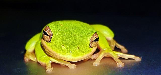 Wie Sie die Frosch-Strategie 50 Prozent effektiver macht - Frosch